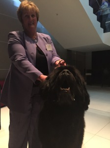 Le Shuttle Eurostar Winners at ukcxaward with passenger zofia newfoundland dog